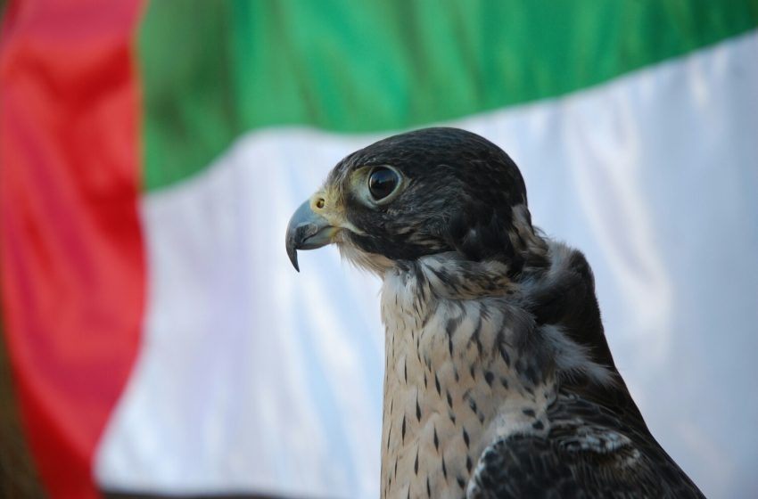 ADIHEX hosts scientific conference on future of falconry