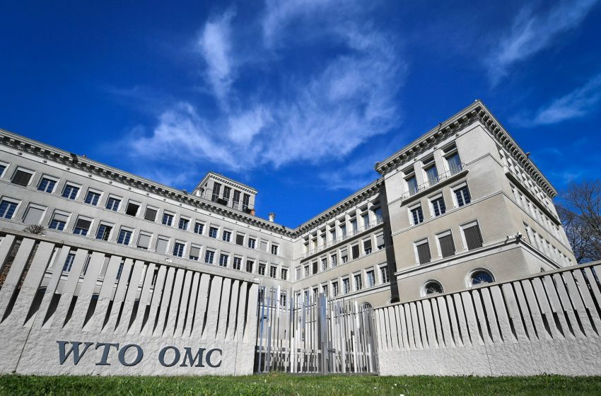 Global trade rebound beats expectations but marked by regional divergences:WTO